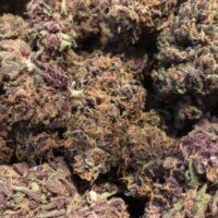 Passion fruit strain