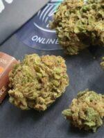 orange sherbet strain