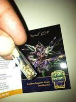 grand daddy purp seeds