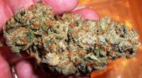 blueberry hash og