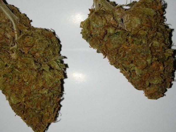 god gift strain